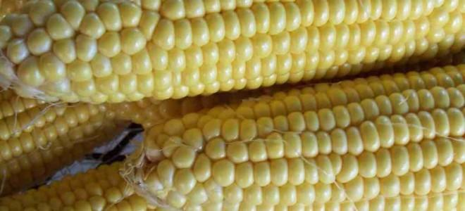 Польза кукурузы для здоровья